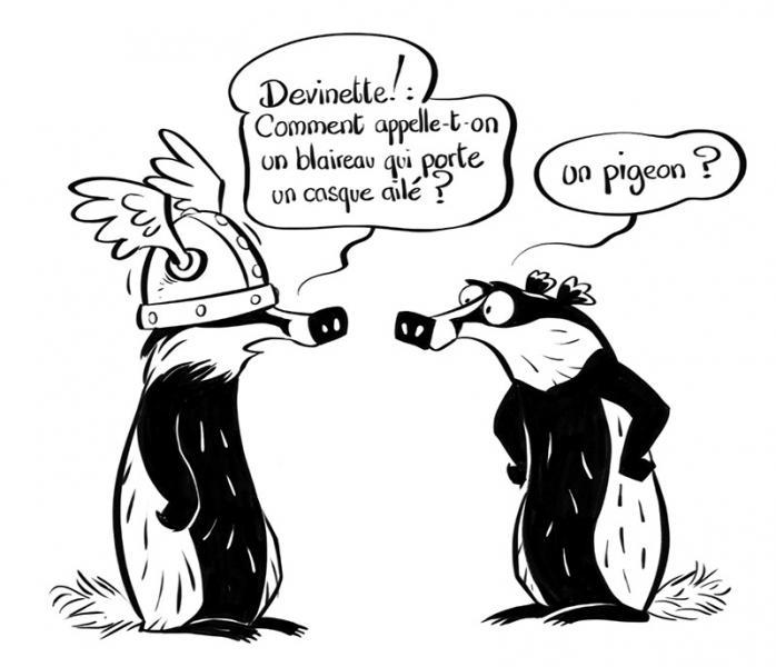 blaireau-pigeon